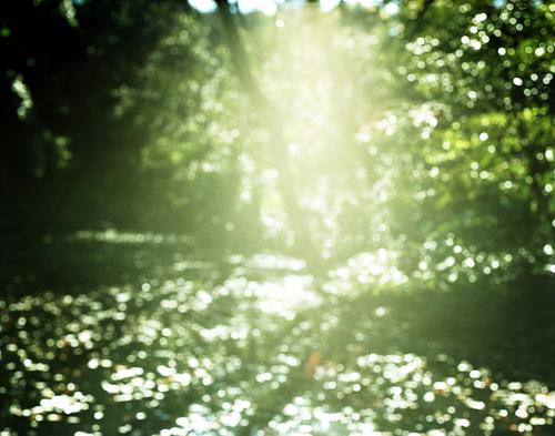 光の森.jpg