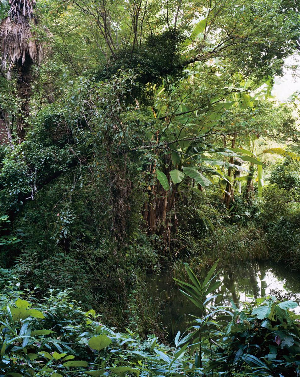 nature31.jpg